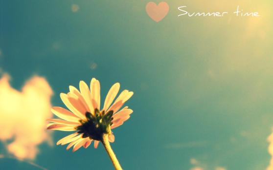 summer_time_flower_daisy-wide